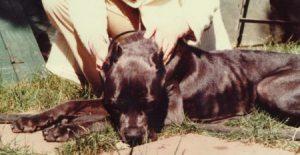 Gussie, aka Pansy